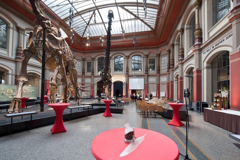 museum f r naturkunde in berlin. Black Bedroom Furniture Sets. Home Design Ideas
